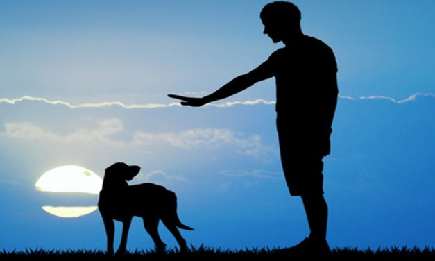 Getting Started with E-Collar Dog Obedience Training